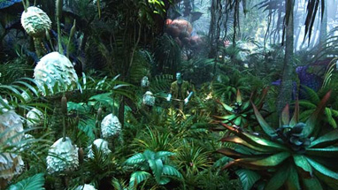 More of these plants should have been Na'vi eating.