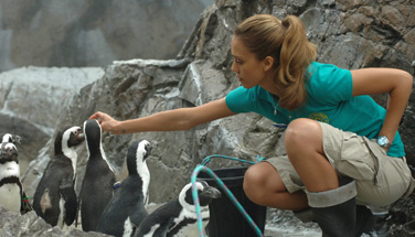 Jessica Alba *and* penguins? Why wasn't this movie a blockbuster?