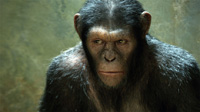 Why doesn't anyone ever make a sock chimpanzee?